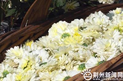"""荆州区马山镇安碑村:脱贫产业""""花果飘香"""""""