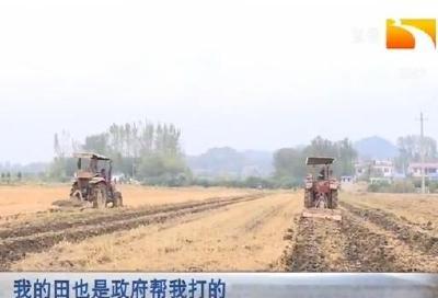 浠水:政府买单 五万亩冬闲田种油菜