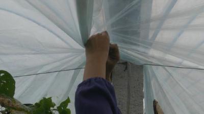 """种菜""""神器""""多,给蔬菜增温保暖、防病虫害!入冬时节给菜园升级,亩增产3%"""