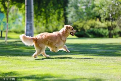 """湖北一地""""加强版""""养犬令出炉:中华田园犬或许可以养!"""