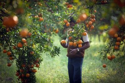 未来5年,靠柑橘赚钱的3个机会!(推荐阅读)