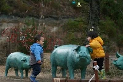 日本人把休闲农业又玩出了新花样,50万人排队赏猪,年收入50亿!
