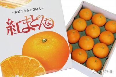 """日本柑橘为何从不""""低价滞销""""?保障果农利益的5大措施,我们应该学习!"""