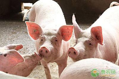 2020年养猪一定挣钱,但需破解养殖户的这些担忧!农业农村部专家提四大建议