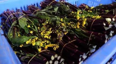 受天气影响,今冬洪山菜薹入市价格较高,精品菜薹卖到一斤30元,后期价格如何?