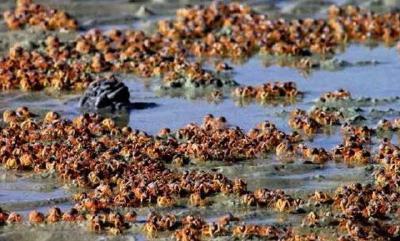 小龙虾又成入侵物种?龙虾店纷纷关门,店家:国人为何不吃了?