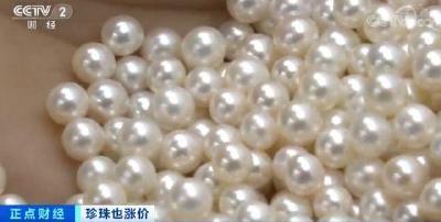 珍珠价格连续三年上涨,养殖面积减半,一个蚌最高能卖五六十