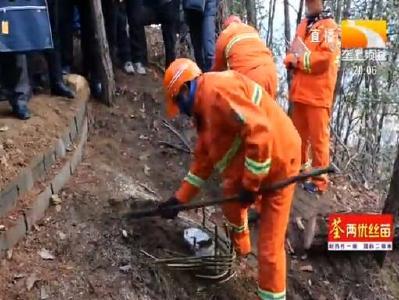 林业专家支招 松材线虫病防治正当时