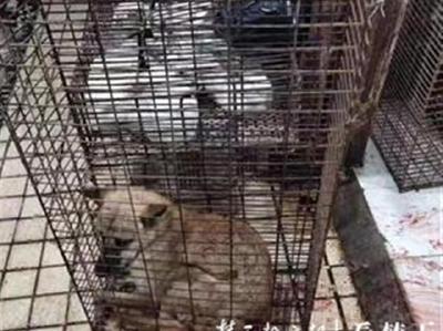 朋友圈里杀狗卖肉遭质疑,餐馆老板表示将删图