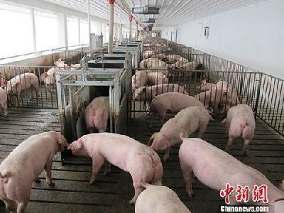 每天猪叫声从半夜一直持续到天亮,噪音问题该怎么办?