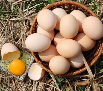 """到底什么蛋是土鸡蛋?全国第一个""""土鸡蛋""""相关标准在湖北诞生"""