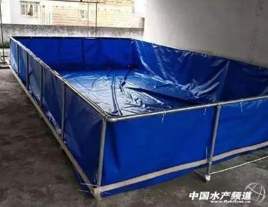 """越南养蛙又有""""新招"""",这个养殖模式赚钱!"""