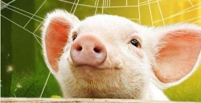 嫌猪肉太贵不妨自己养:5G时代下的新农业