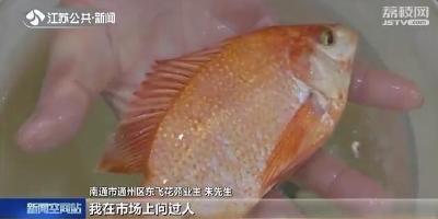 市民河塘里捉到红色怪鱼 一筹莫展养家里:能不能吃?