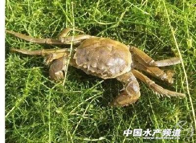湖蟹和塘蟹有什么区别?关于螃蟹,你想知道的都在这