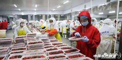 小龙虾每年价格波动很大,那么有没有可能在低价收购囤货,然后高价卖出?