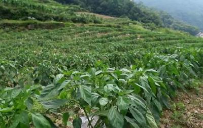 权威发布 | 春季果茶园管理技术指导意见