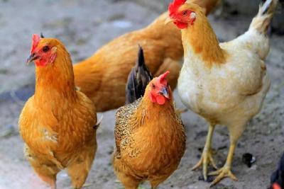 三部委联合紧急发文:千方百计为养殖业解困,加快复工复产