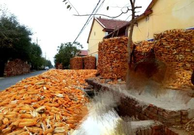 湖北饲料企业原料紧张将大大缓解 政策性玉米竞拍成交7.34万吨