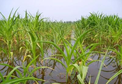 """""""抗疫情、保春耕"""" 湖北省种子协会致全省农作物种子行业的倡议书"""