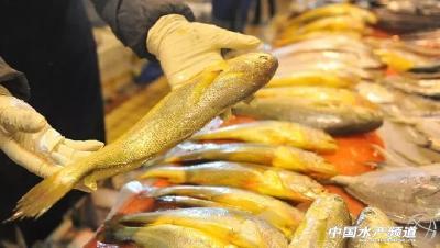 育苗受阻、存塘量大......疫情期间这条鱼产业发生了什么变化?分析来了!