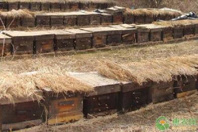 冬季蜜蜂要如何饲喂?冬季蜜蜂饲喂要点介绍