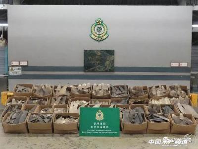 香港海关检获502公斤疑受管制属濒危物种干鱼翅!