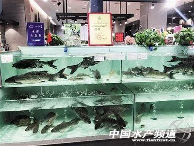 """鱼价也讲""""出身"""" ,同一种鱼但价格相差一倍多"""