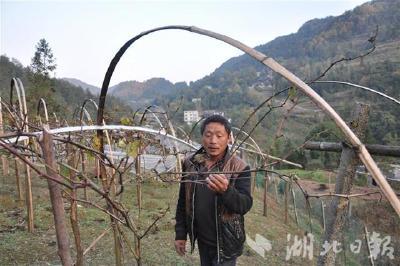 桂花村:跟着大户种雷竹 脱贫致富带头人