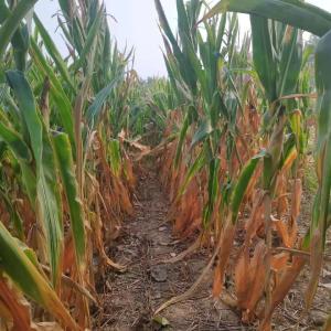 预警:2020年旱涝灾害并存!农业生产如何防范?提前看答案!