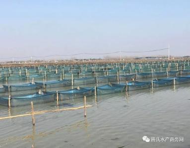 求扩散!江苏泗洪500多万斤大闸蟹无销路,现向社会各界声援
