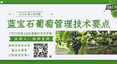 长江云垄上农学院:果木课堂之蓝宝石葡萄管理技术要点(内附视频)