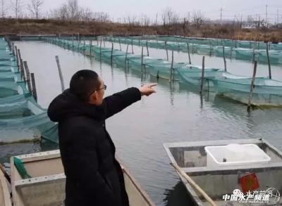 情况尚不明朗,湖北河蟹产业链面临困局