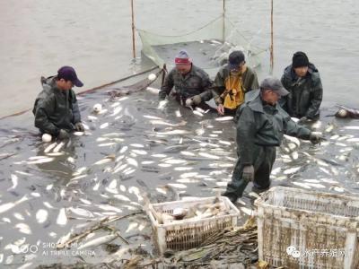 老百姓吃鱼不方便,养殖户卖鱼很困难!这个怪现象还要维持多久?
