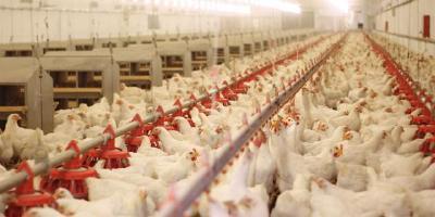 """畜禽养殖业正闯""""交通梗阻关""""  全国饲料企业开工复产明显加速"""
