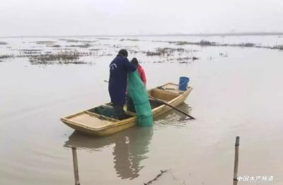 救人还是救螃蟹?湖北监利河蟹、小龙虾迎史上最冷寒冬