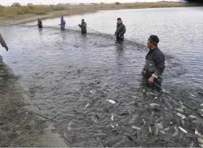 重要文件!鱼、虾、蟹压塘严重,国家号召发挥电商优势,打通销路助水产企业尽快复工复产
