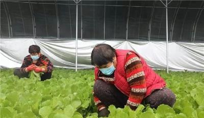 用工难、销售难、进村难...疫情对我国蔬菜生产、供应的影响有多大?怎么办?