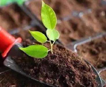 商品有机肥好还是农家粪肥好?