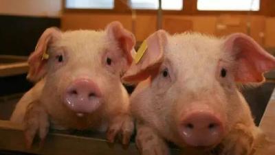 筑牢群众食肉安全防线,荆州市农业农村局狠抓动物疫病防控工作