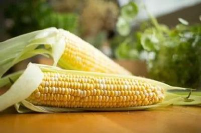 宜昌农业 |种玉米啦!春季玉米栽培技术要点,快来看看……