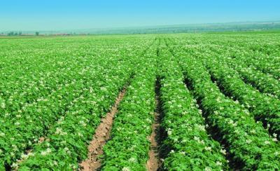 宜昌农业 |3月水稻小麦、玉米油菜、柑橘茶叶、蔬菜、中药材等农业生产应注意这些……
