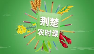战疫情保春耕 | 荆楚农时课:瓜豆类蔬菜在播种时需要注意什么?