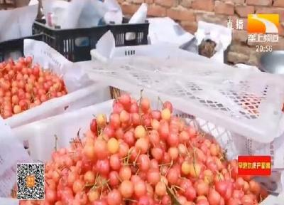 襄阳南漳:线上线下齐发力 助推樱桃销售