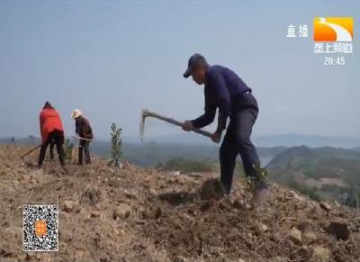 十堰丹江口:打造精品柑桔示范园 带动村民就业增收