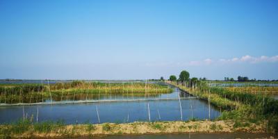 农业农村部办公厅印发《稻渔综合种养生产技术指南》