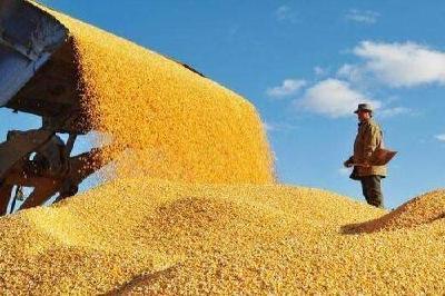 当前我国粮食生产形势如何?你关心的问题都在这了