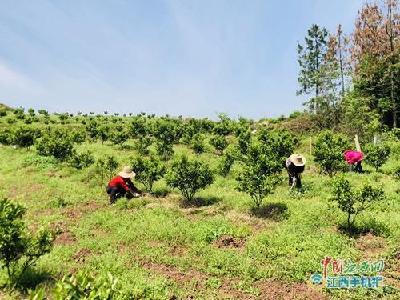 农业农村部:全力以赴完成今年产业扶贫目标任务