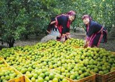 产业扶贫 荆州确保每个贫困户有1个以上增收项目