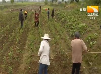 新洲:一人可打两份工 不出村头稳增收